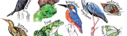 Hennie Haworth Wetlands News Feature Image