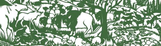 Sarah Dennis Animal Camouflage News Feature Image
