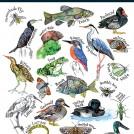 Hennie Haworth Wetlands News Item Poster